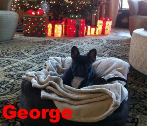 george-review