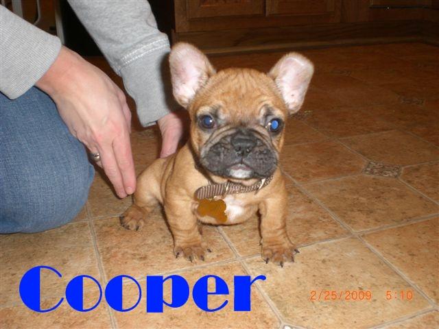 puppy25