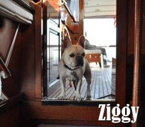 ziggy-review