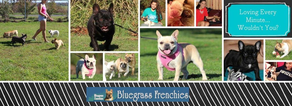 Bluegrass Frenchies